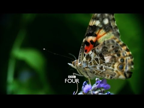 The Great Butterfly Adventure: Trailer - BBC Four