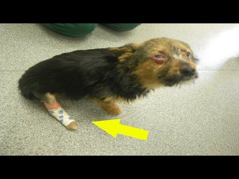 Four Teens Tortured A Tiny Puppy And Set Him On Fire – But They Didn't Break His Loving Spirit.