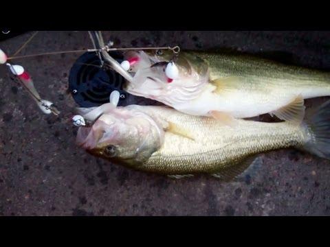 Alabama Rig Bass Fishing.