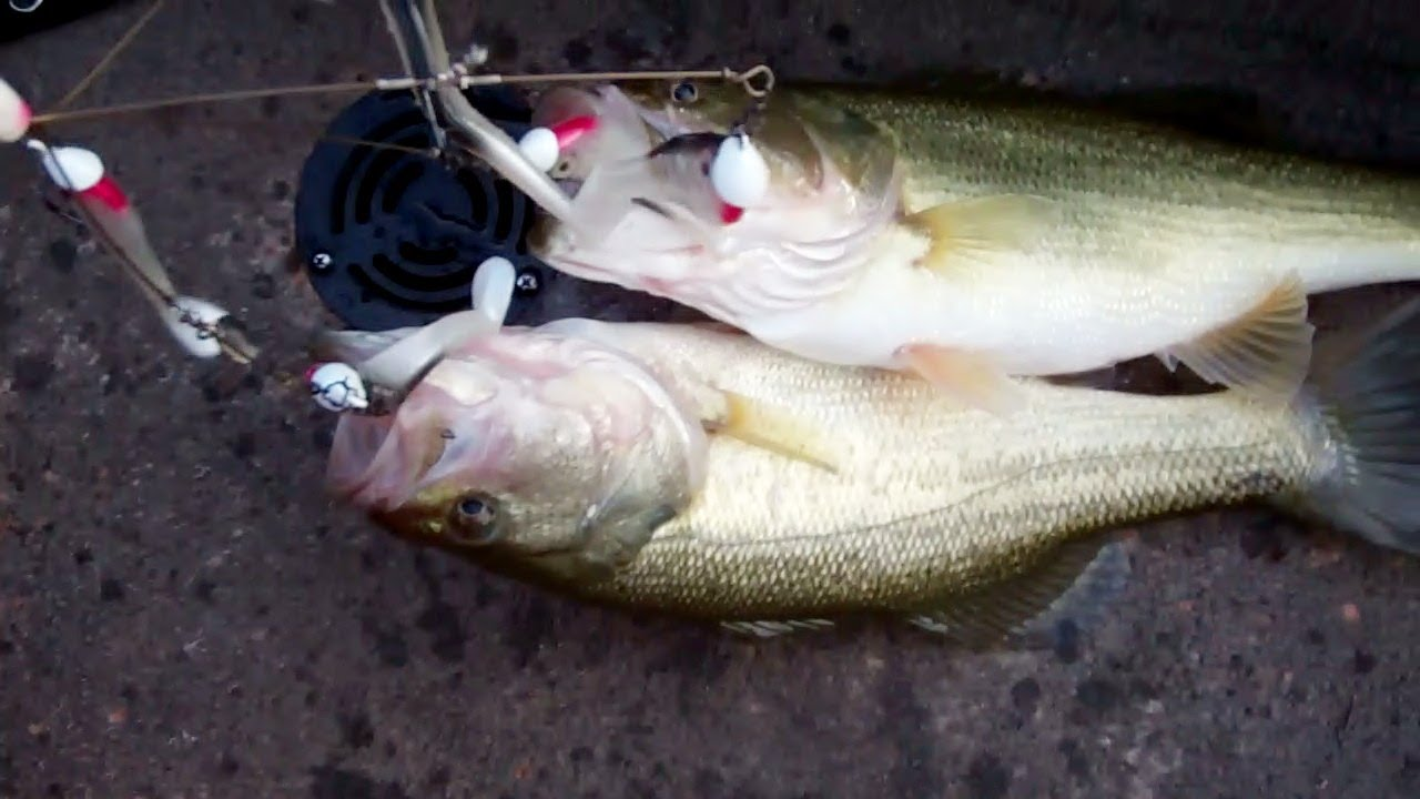 alabama rig bass fishing. - youtube, Soft Baits