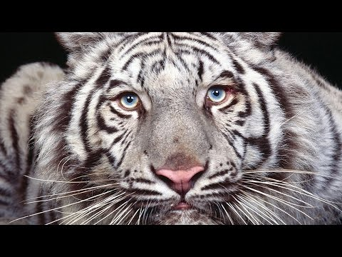 10 Rarest Animals On Earth That May Be Gone Soon