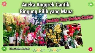 Aneka Anggrek Cantik Bingung Pilih yang Mana | Orchids Tour Garden Center