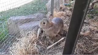 Pet Animal - Rabbits for Kids - Funny Rabbit Videos Compilation ទន្សាយ #2