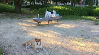 いつもの公園で友達のはるちゃんも休憩中。