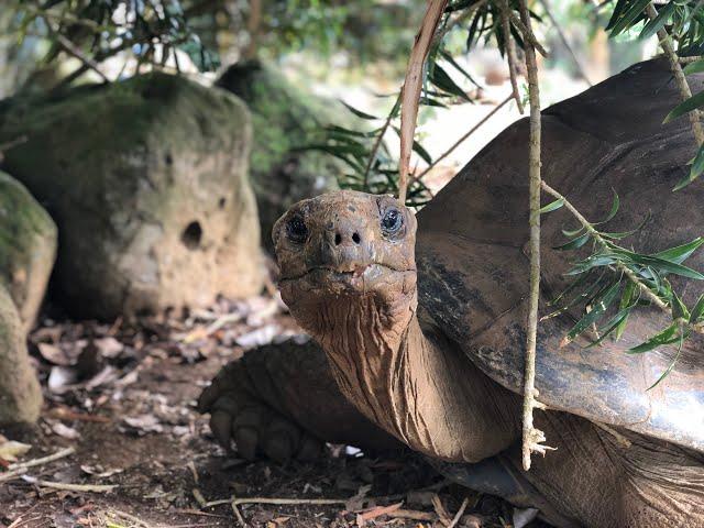 En 2 minutes, visitez la Vanille Nature Park !