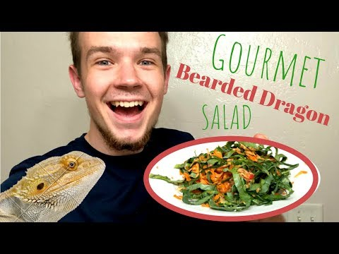 5 ways to make the BEST Bearded Dragon Salad