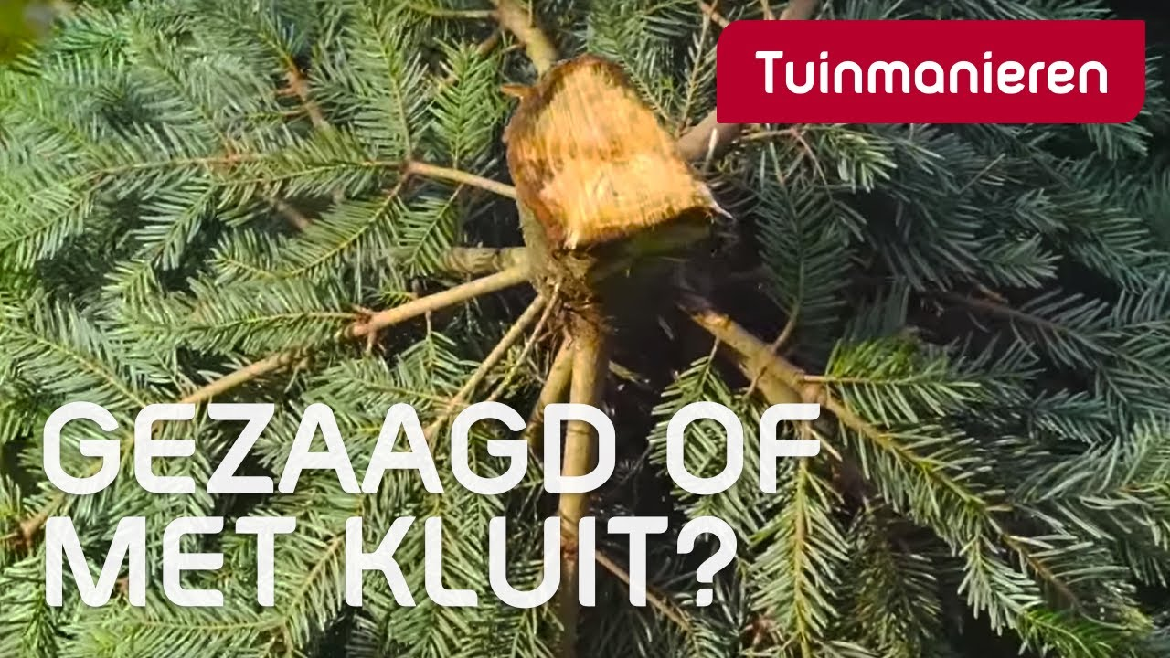 Tips om de perfecte kerstboom in huis te halen