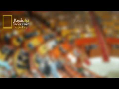Hassan II 2120664712020 ????????????