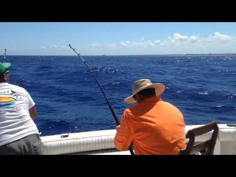 Deep Sea Fishing - Marlin, Sailfish, And Mahi Mahi