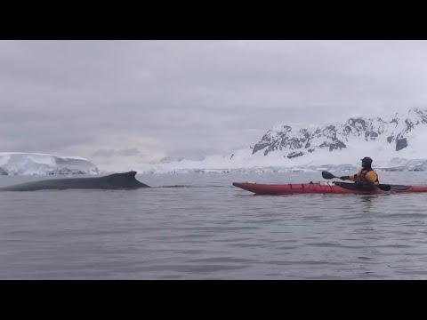 Sea Kayak in Anatarctica