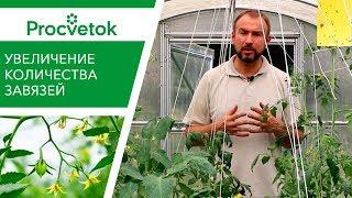Увеличение урожая помидоров. Как повысить количество завязей томатов (баклажанов, перцев)?