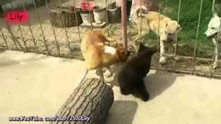 Медвежонок и Собака! / Bear littered with dog!