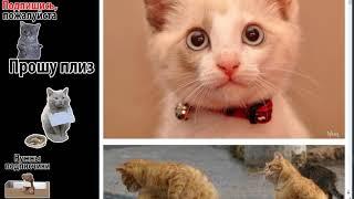 Кошки смешные и грустные=(