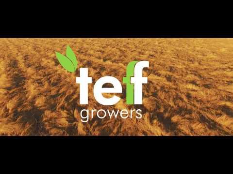 Teff Growers