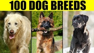 Dog Breeds  List of 100 Most Popular Dog Breeds in the World