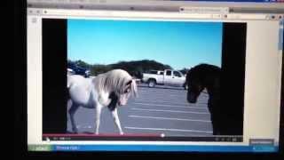 Язык лошадей. Предупреждения, которых люди не видят. Критичный взгляд лошади, брошенный жеребенок(Это перевод вот этого видео. http://www.youtube.com/watch?v=t87dPomUanc В этом видео рассказывается о лошадинном языке и спосо..., 2015-04-05T16:56:02.000Z)