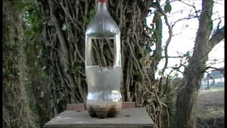 Squirrel Hunting, Diy Squirrel Feeder For Shooting