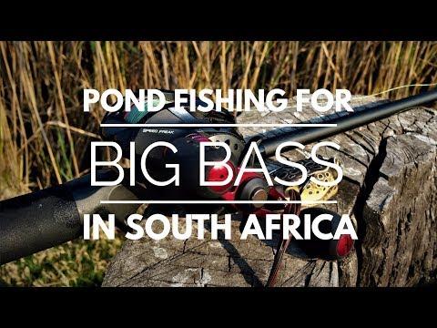 SUMMER BASS FISHING SOUTH AFRICA
