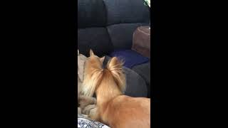 Puppy Annoying her Sibling
