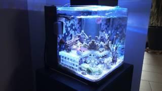 Pico Reef Amtra Wave Aqua Orion 25 Ablegerbecken Meerwasser 10l
