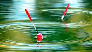 Рыбалка на поплавок на утренней зорьке - ловля карася. Семейная рыбалка с сыном и отцом