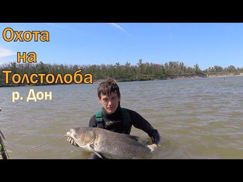правила подводной охоты в ростовской области 2016