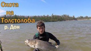 Подводная охота на Толстолоба р  Дон.