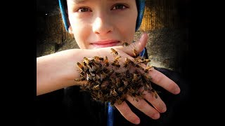 Весенний поцелуй пчелы Buckfast 2019