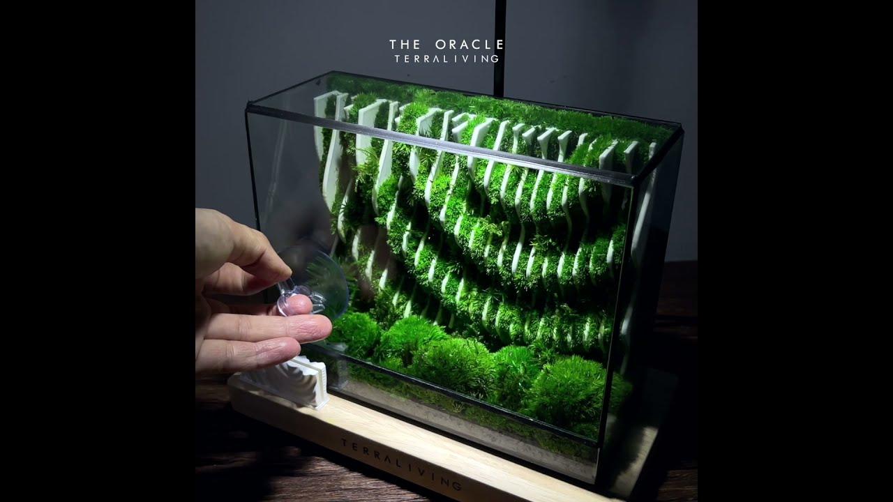 The Oracle - a Parametric Moss Sculpture Terrarium by TerraLiving