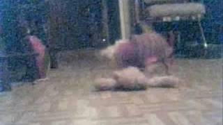 Pebbles fighting her bear