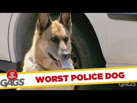 Throwback Thursday - Worst Police Dog Ever!