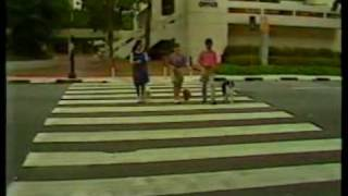 Dog Training Video - Waggie In Am Singapore