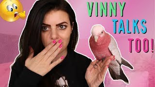Download MY PARROT AND I ANSWER YOUR BIRD QUESTIONS | VINNY TALKS (with subtitles)