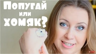 Какое животное завести - волнистого попугая или джунгарского хомяка?