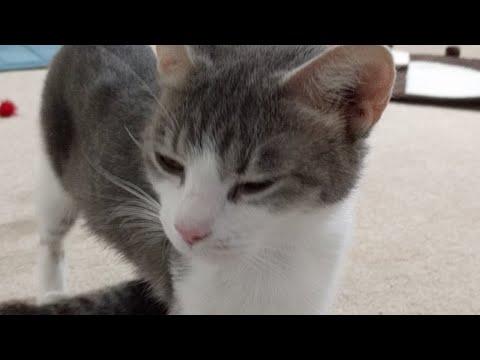 Kitten Close Up 2017-06-16