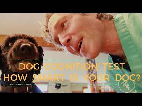 How Smart IS Your Dog? Canine Cognition Test