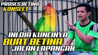 Download lagu WAJIB COBA CARA INI - BUAT BETINA JALAN LAPANGAN - Novi Banjarnegara Gemilang abadi sf