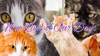 Nine Lives Of Our Days | Spanish Cat Drama