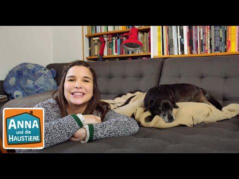 Das Hunde Einmaleins Information Fur Kinder Anna Und Die