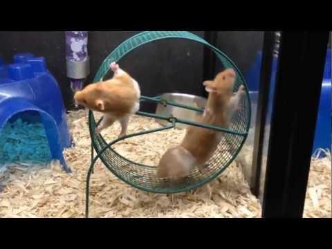 Hamster Wheel