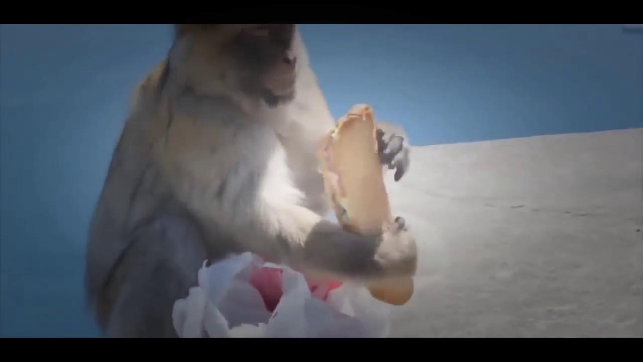 Drole - réunion de singe touristiques les plus incroyables attaques d'animaux sauvages vidéos ...