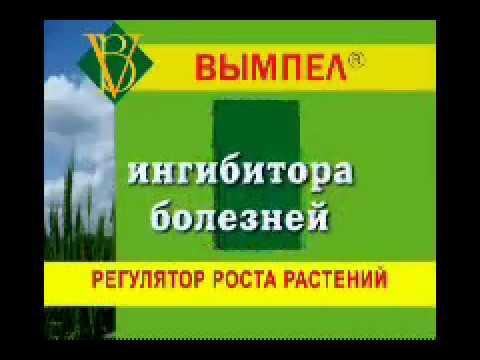 Купить стимулятор роста растений вл 77, вымпел, микроудобрения оракул в россии от эксклюзивного партнера группы компаний долина.