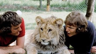 Преданные животные, невероятные истории