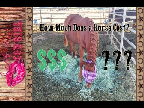 Horse Ownership Options! - YouTube