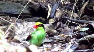 Repeat youtube video นกสวยงามในผืนป่าธรรมชาติ