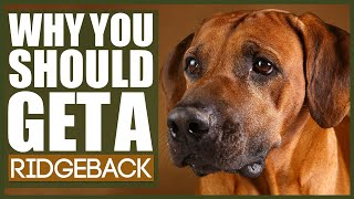 5 Reasons Why YOU SHOULD Get A RIDGEBACK