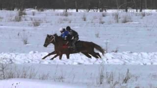 Скачка чкв Шушенское 2016 (Horse–Animal-racing-конь-смотреть-онлайн-бега)
