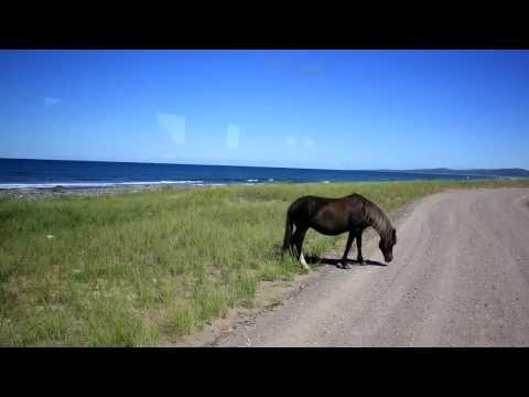 Horses of Saint Pierre et Miquelon