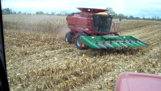 farming case ih 2388 combining corn mx255