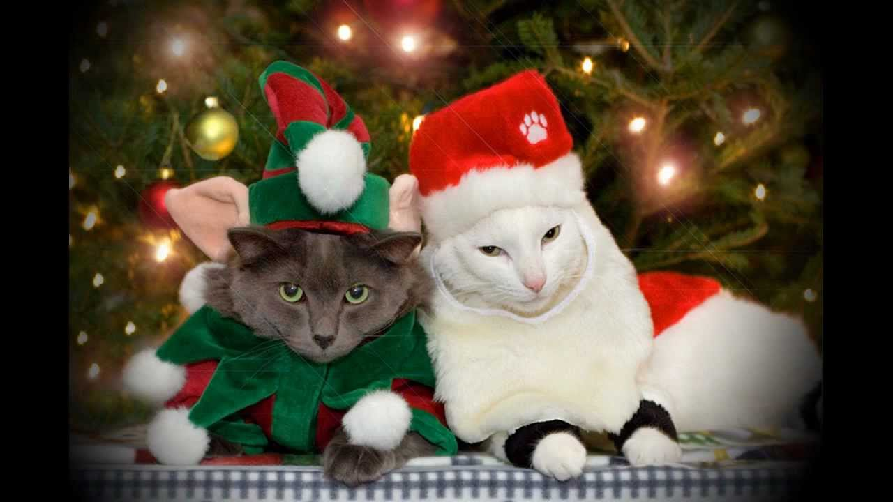 new funny pictures - cat : merry christmas and happy new year